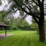 drzewo na polanie piknikowej